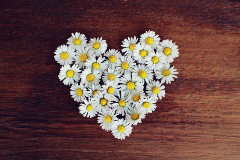 デイジーの花でハートの形を作る