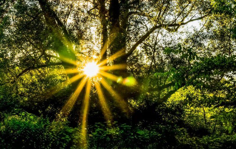復縁の希望を感じさせる陽の光