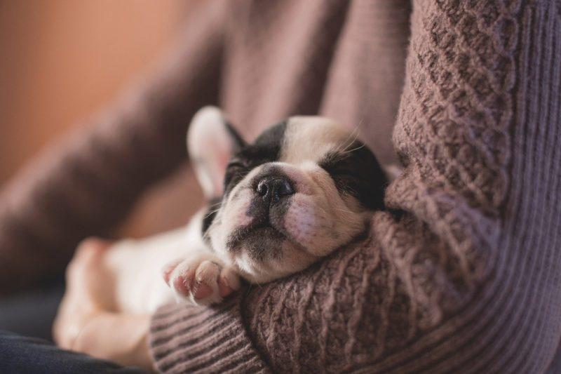 飼い主に抱かれて安心して眠る子犬