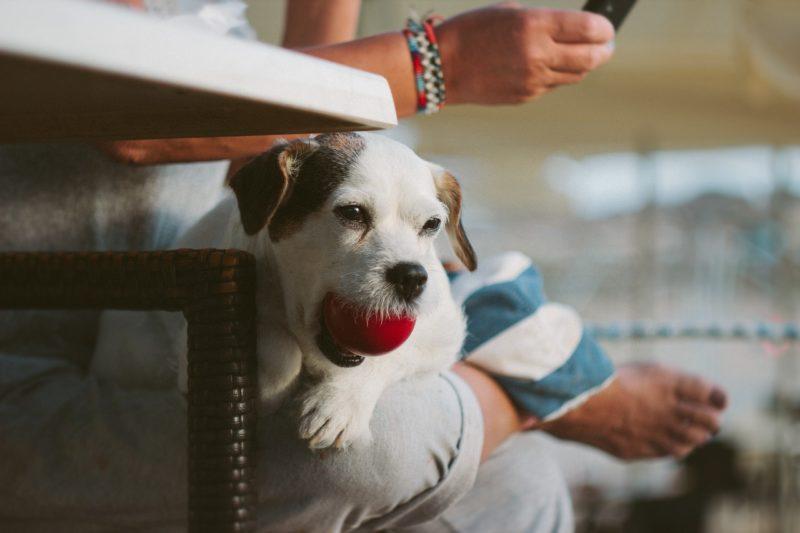 おもちゃのボールをくわえる子犬