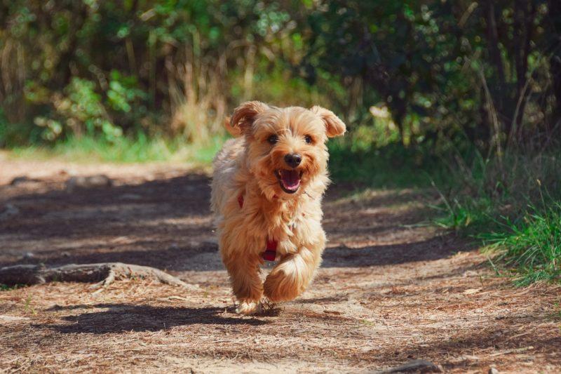 元気に走り回る子犬