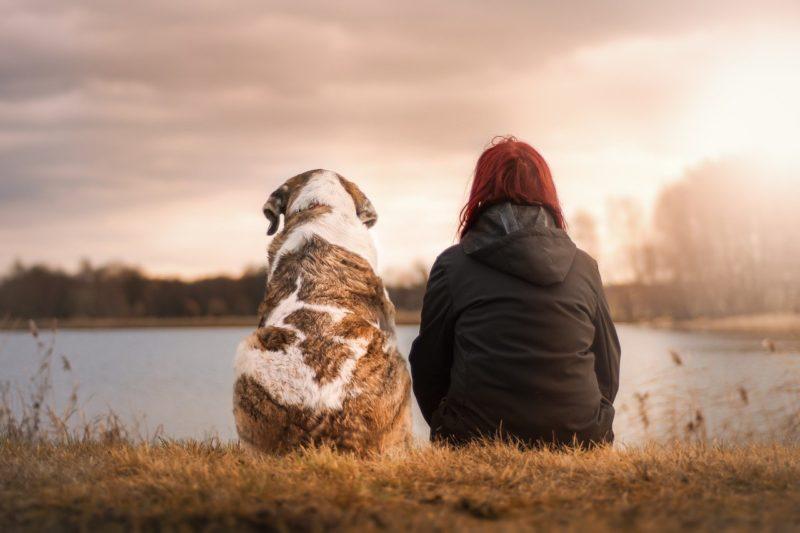 川辺に犬と座り夕陽を見る女性
