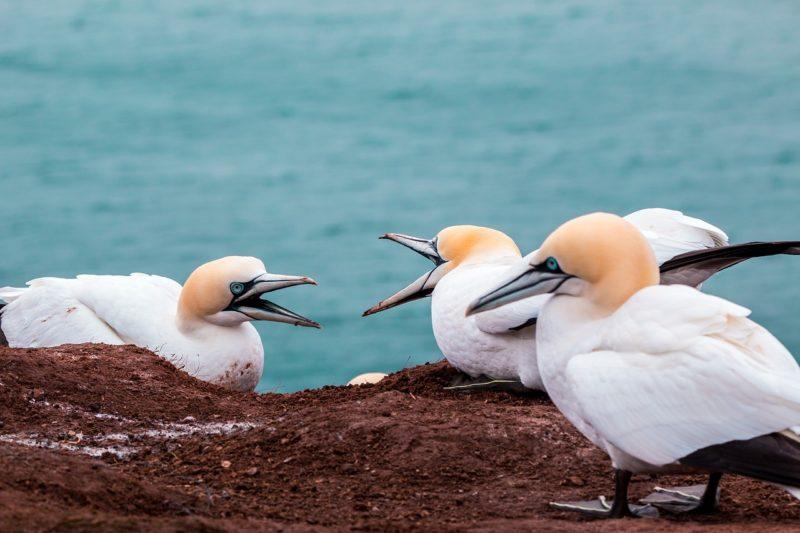 トラブルをイメージさせる鳥の縄張り争いの喧嘩